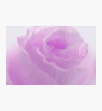 Pink Lisianthus Macro  Photographic Print