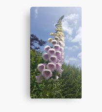 Foxglove climbing into the sky Canvas Print