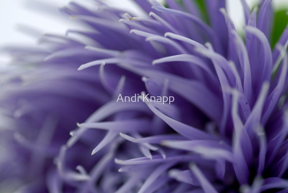 Purple Flower by Andi Knapp