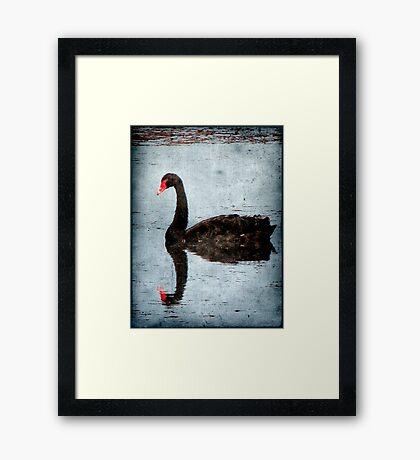 Morning on Dangars Lagoon III Framed Print