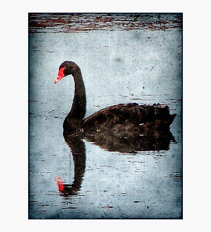 Morning on Dangars Lagoon III Photographic Print