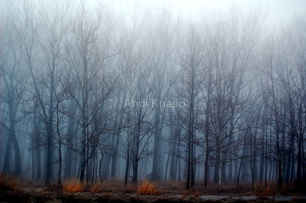 Misty Trees by Andi Knapp