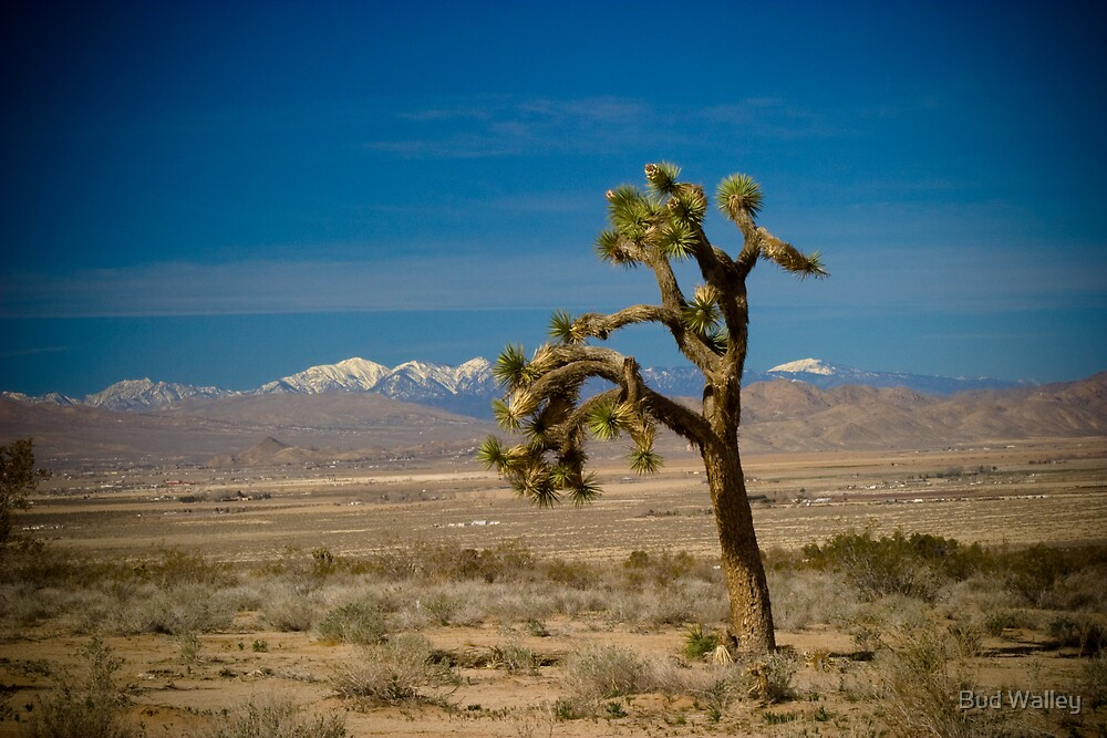 Alone in the Desert by Bud Walley