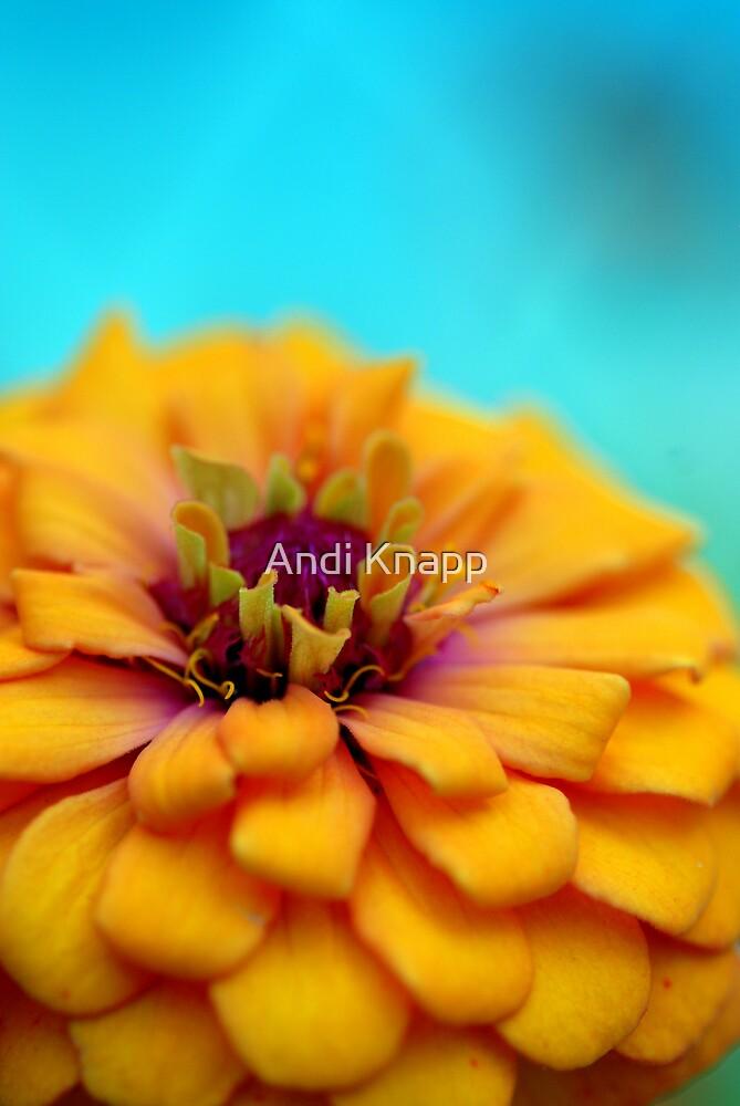 Flower by Andi Knapp