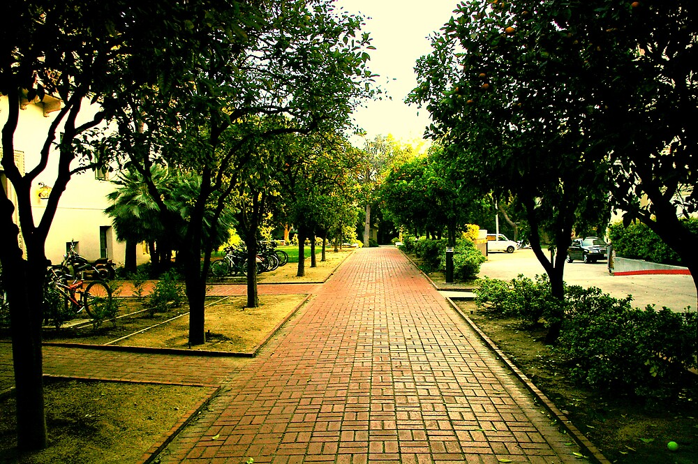 The Orange Brick Road by Chris Popa