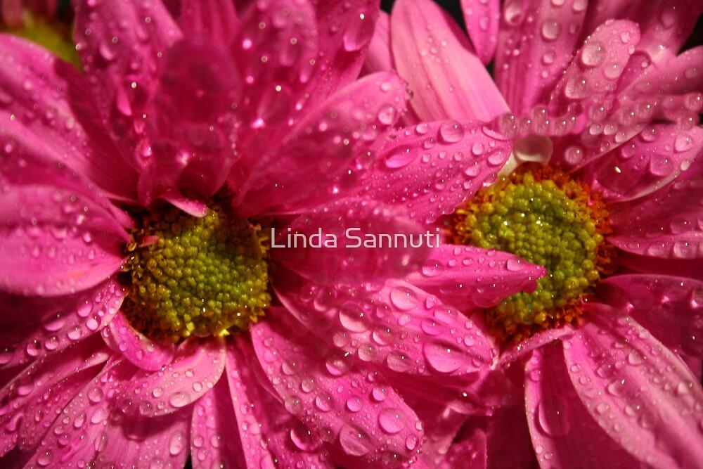 pink drops by Linda Sannuti
