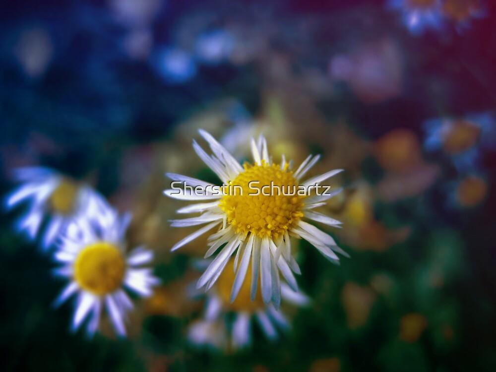 Enchanting  by Sherstin Schwartz