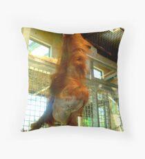 Just Hanging Around. Throw Pillow