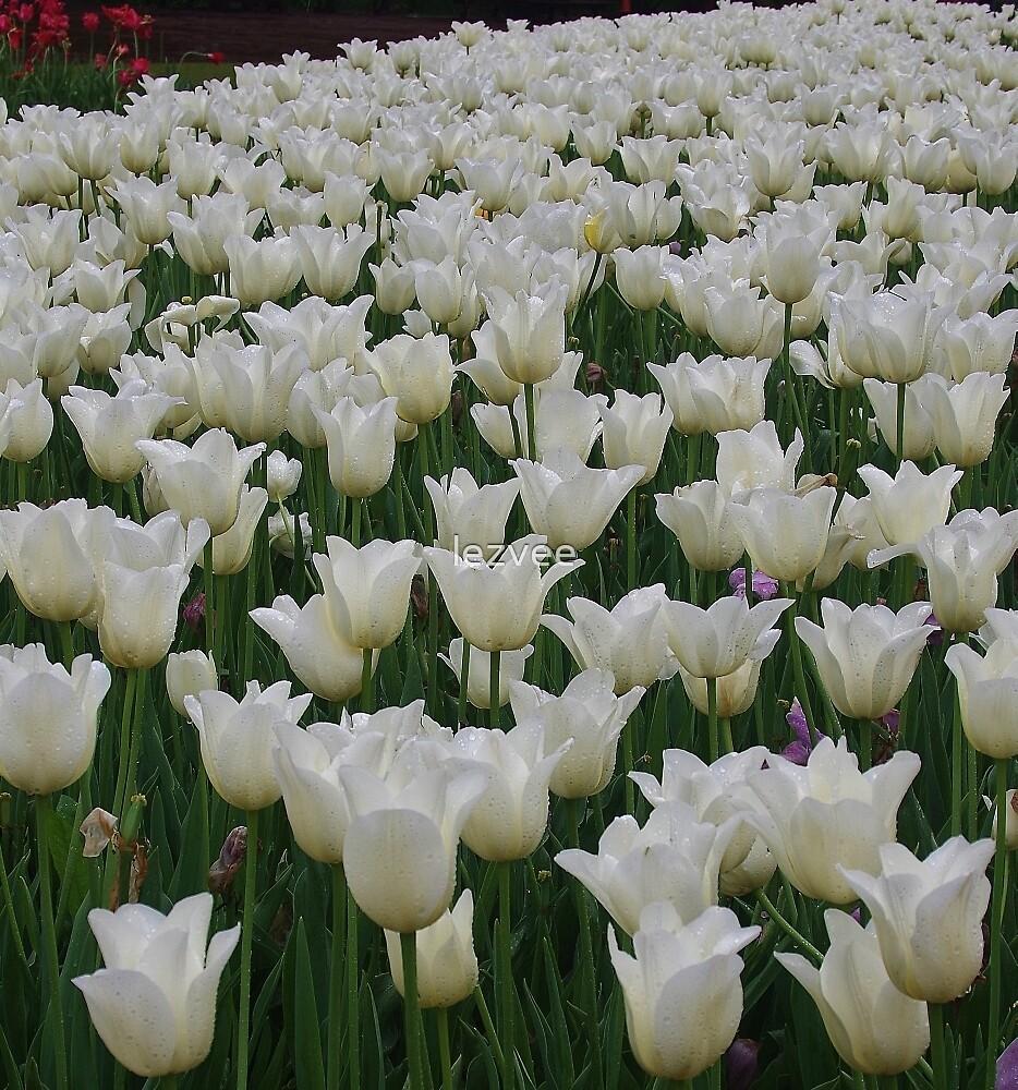 White Tulips by lezvee