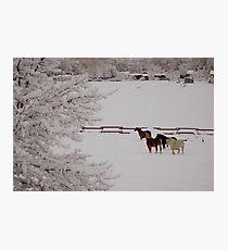 Winter Wonderland w/horses Photographic Print