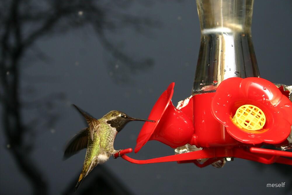 humming bird in snow by meself