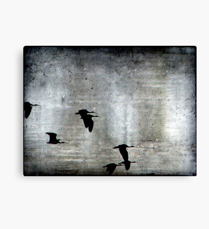 Fly by Night Canvas Print