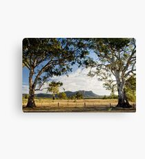grampian redgums Canvas Print