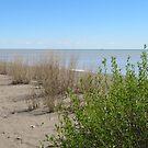 Point Pelee Beach by caybeach