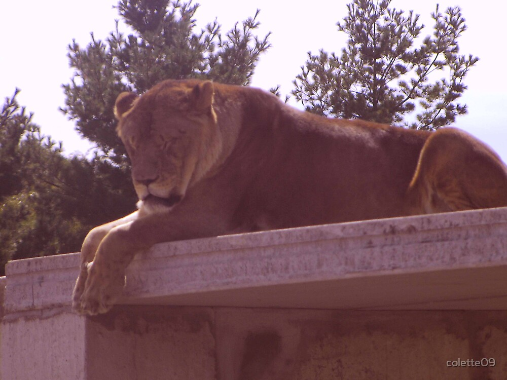 lion by colette09