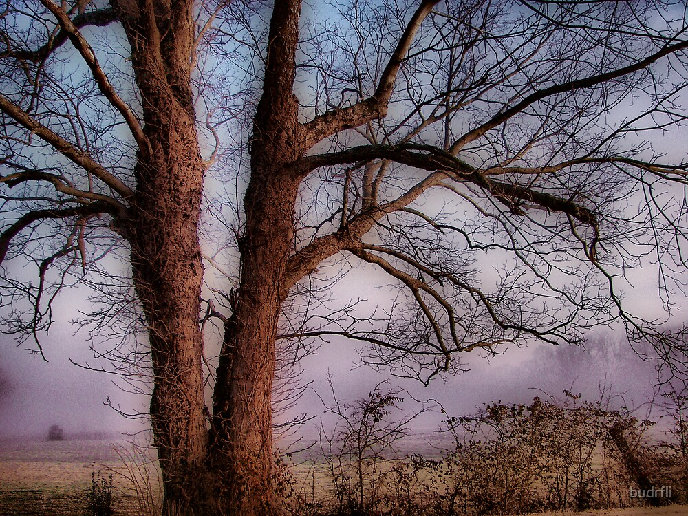 her branches 2 by budrfli