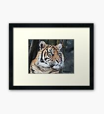 Tiger 02 Framed Print