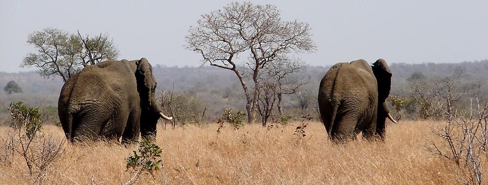 Elephants in the Field by Paul Lindenberg