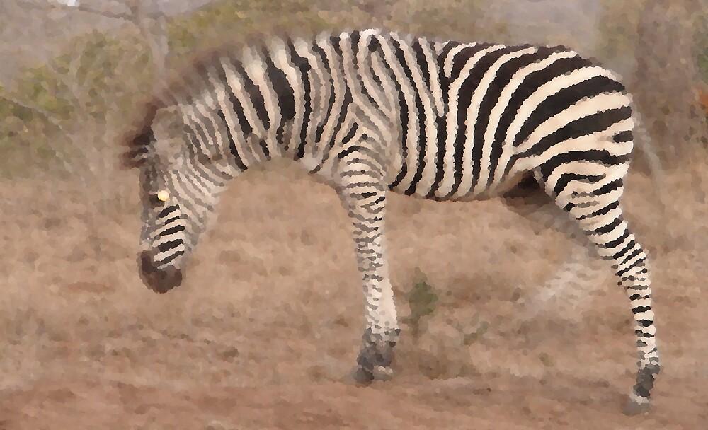 Zebra Movement by Paul Lindenberg
