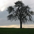Lonetree2 by mindfulmimi