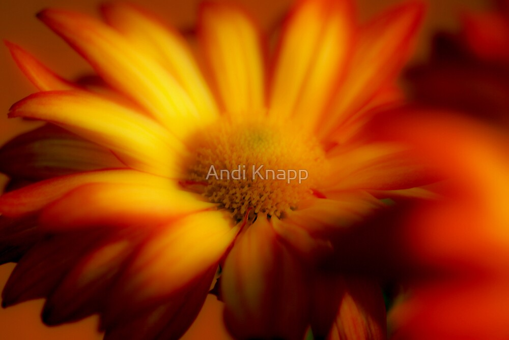 Flower by Andi Knapp