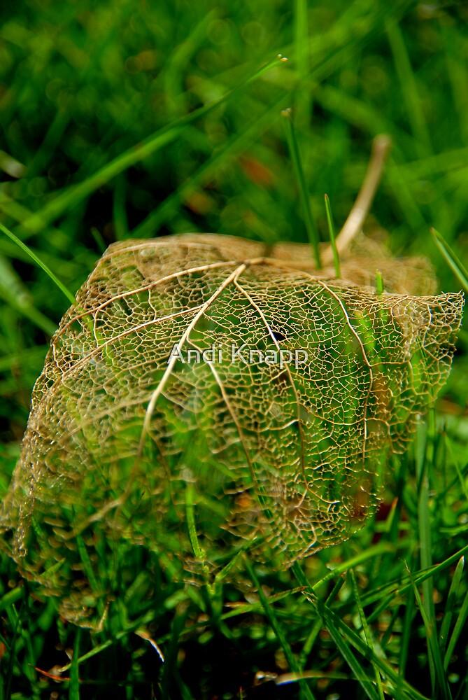 Skeletal Leaf by Andi Knapp