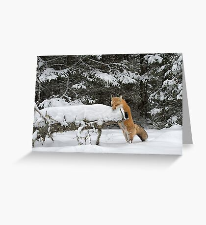 Discovering Snow... Greeting Card