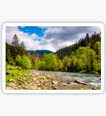 River among the forest in picturesque Carpathian mountains in springtime Sticker