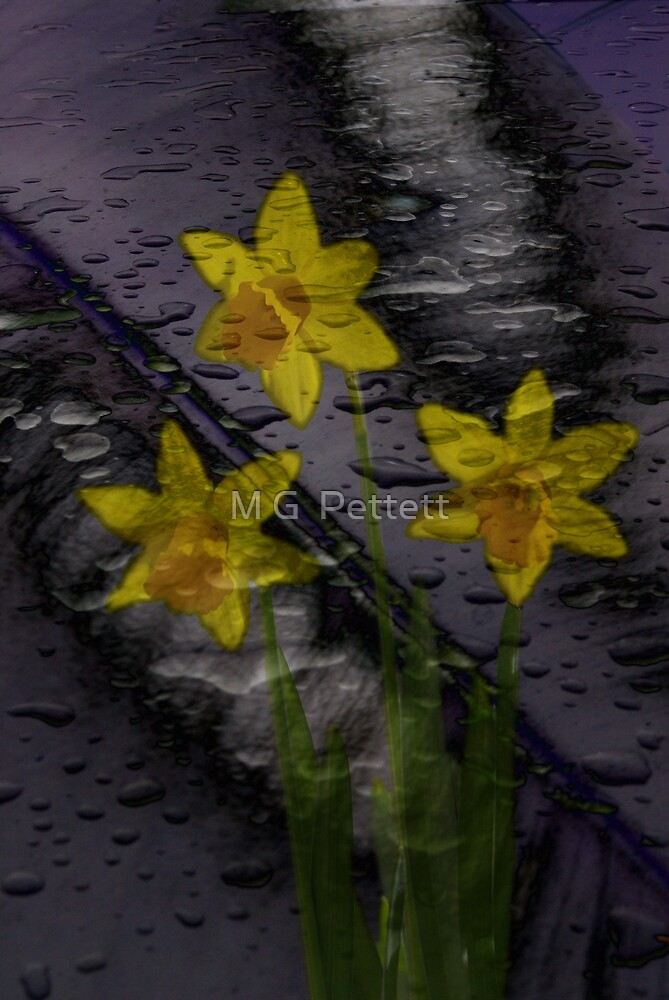 Three flowers by M G  Pettett