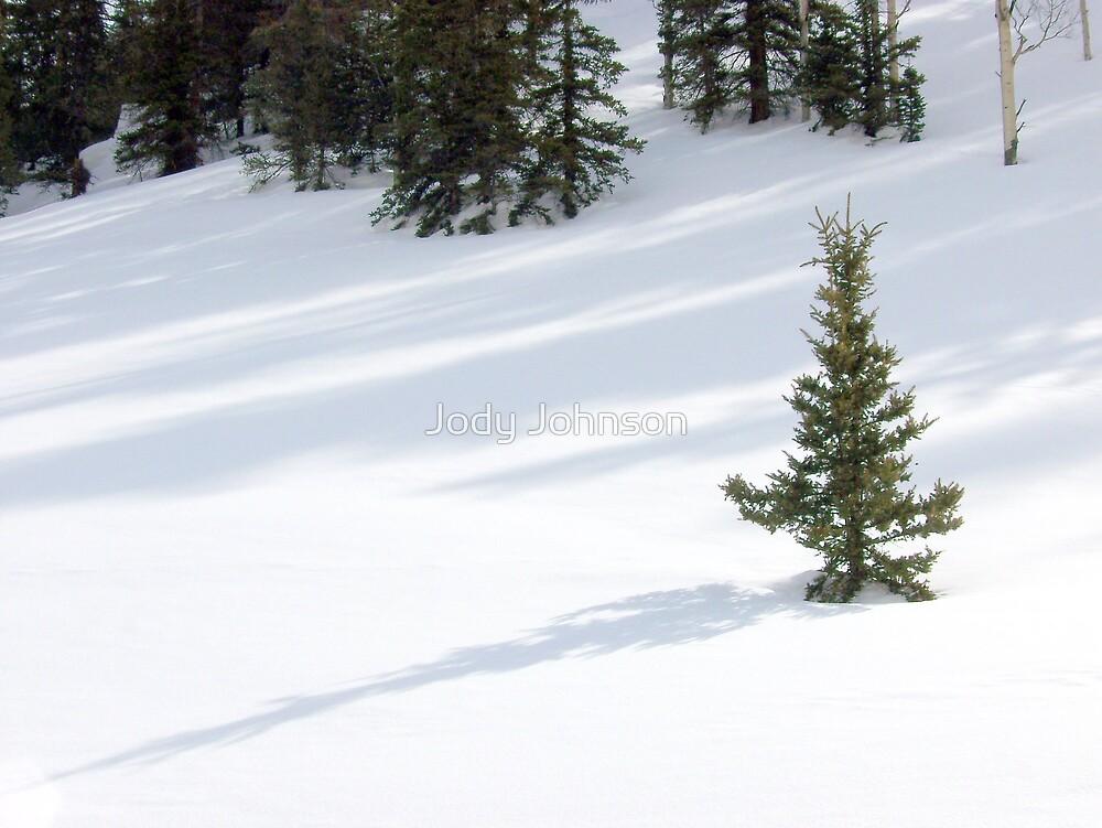 Single Pine on Wolf Creek Pass by Jody Johnson
