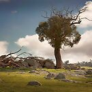 0226 Dying tree by Hans Kawitzki