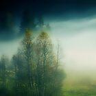 A beautiful Day........... by Imi Koetz