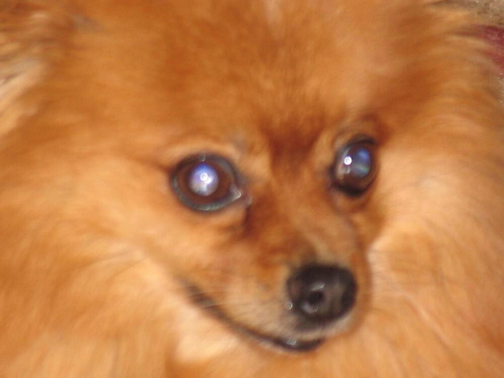 my little pooch by deegarra