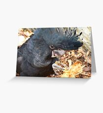 Did You Bring The Preening Equipment? - Black Red Tailed Cockatoo Greeting Card