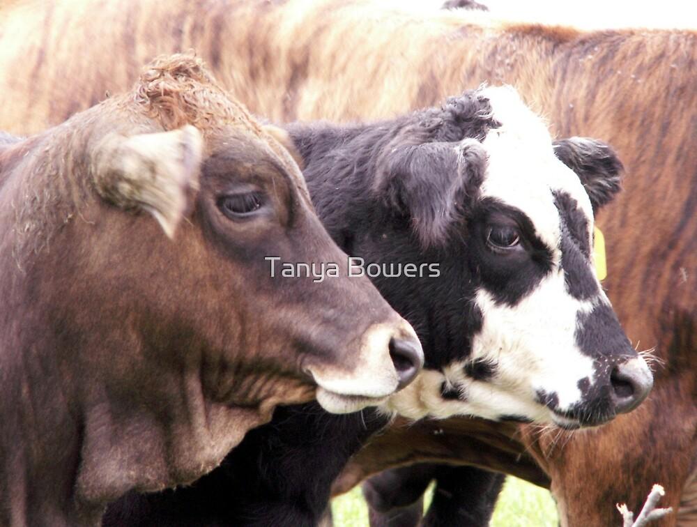Baby Bulls by Tanya Bowers