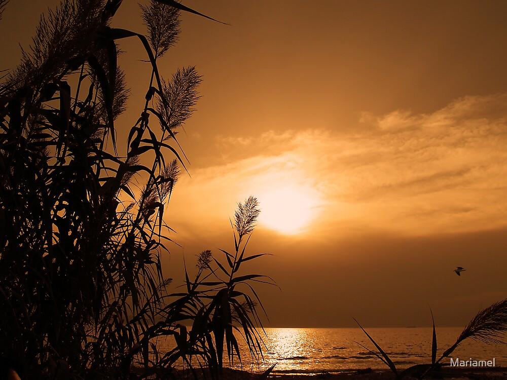 Shining by Mariamel