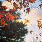 end of autumn by jayview