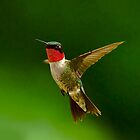 Male Hummingbird In Flight by TJ Baccari Photography