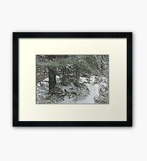 Camp Pathfinder at Algonquin Park Framed Print