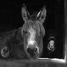 Molly & Friends Monochrome by Wayne King