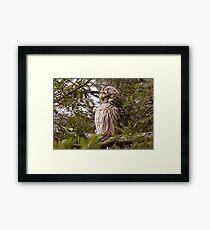 Barred Owl Groomer Framed Print