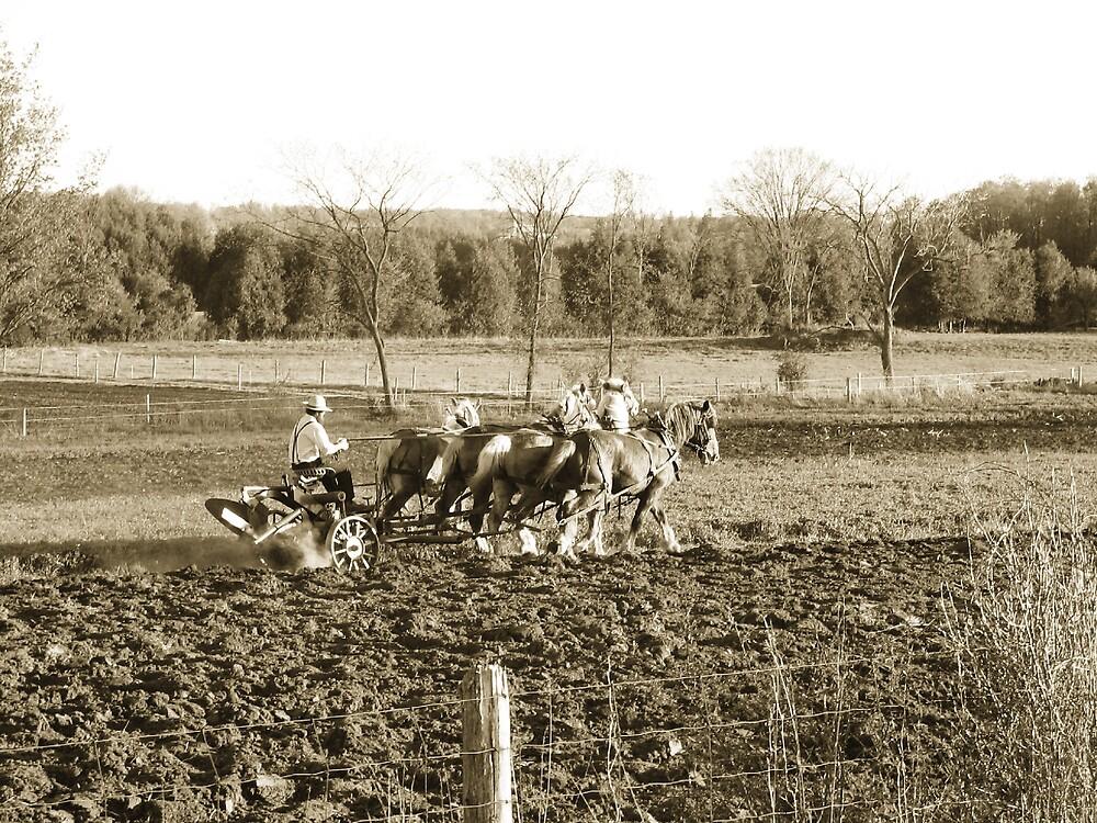 amish farmer by aathomas