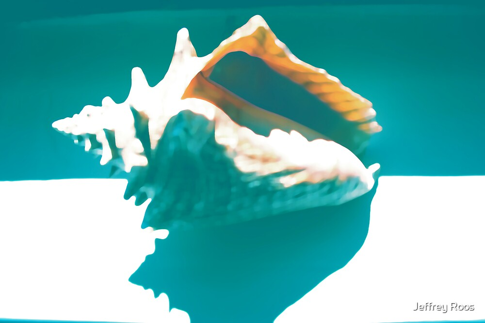 belize conch shell by Jeffrey Roos