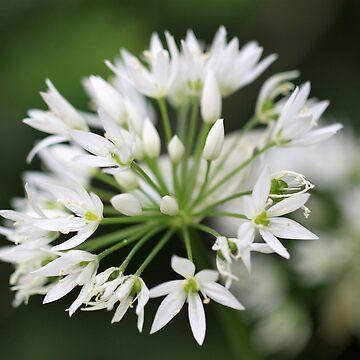 Garlic Flower by JonPaget