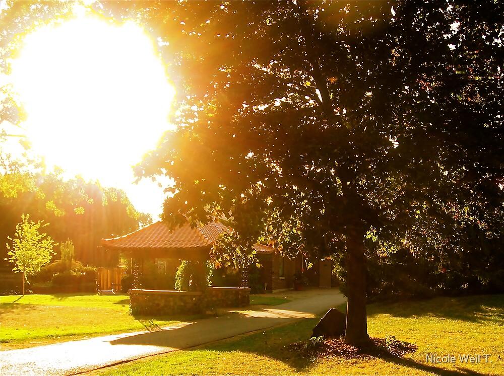 Summer Sunlight by Nicole Weil T.