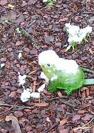 SNOW-CAPPED FROG by mpeakclewett