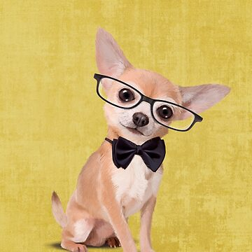 Mr Chihuahua by Sparafuori