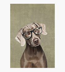 Mr Weimaraner Photographic Print