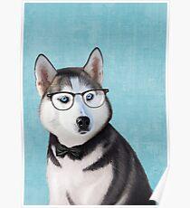 Mr Siberian Husky Poster
