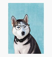 Mr Siberian Husky Photographic Print